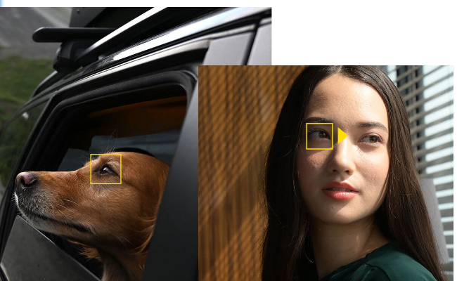Sistem Auto Focus Nikon Z5